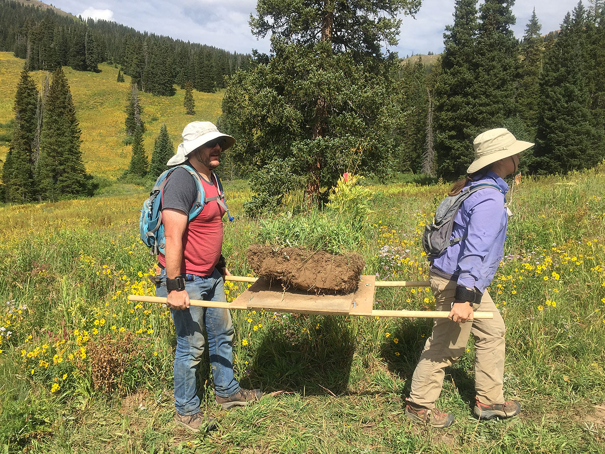 Carrying the soil/plant block