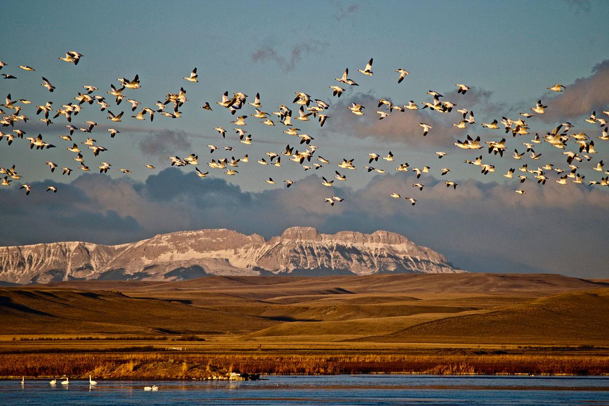 Field Guide for Western Birds: Photo by Joel Long