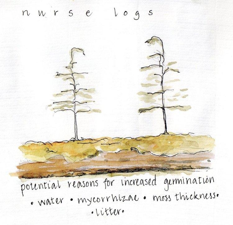 Nurse logs