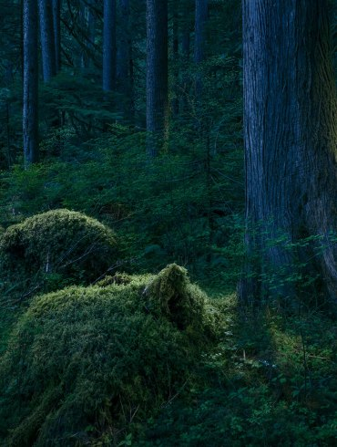 Outside of Time | Forest Landscapes by David Paul Bayles