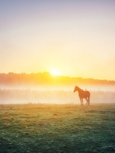 Horse on field at sunrise