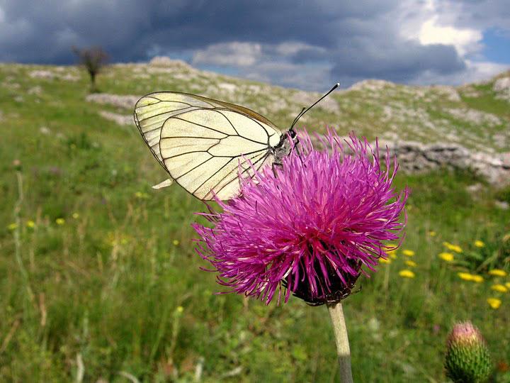 Butterfly on wildflower. Photo by Julian Hoffman.