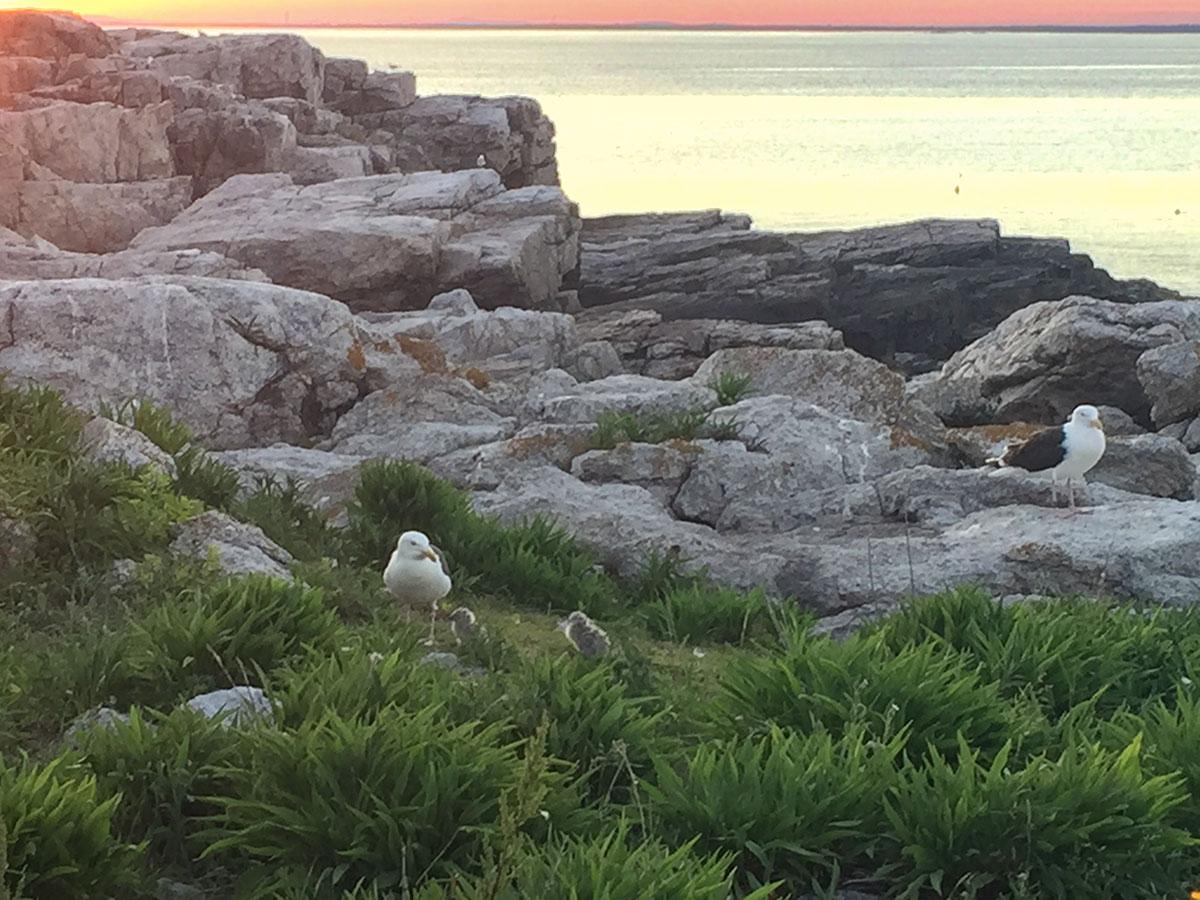 Gulls on the island at twilight.