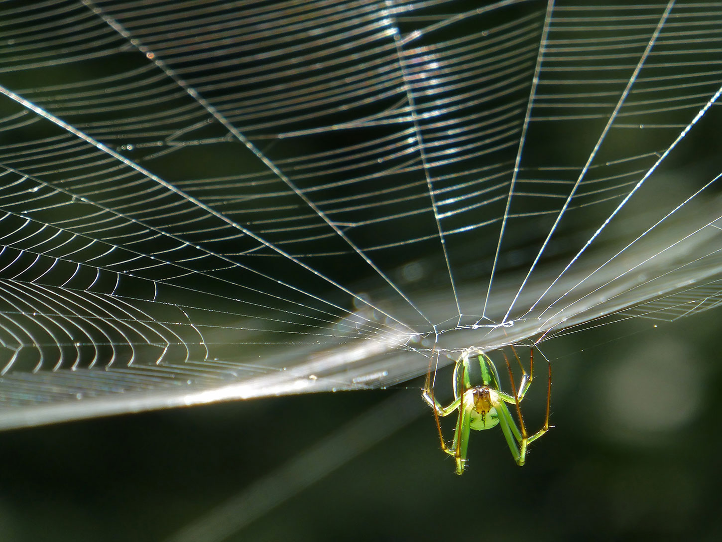 Old Roads, New Stories: Why We Have Spiders, by Rob Carney