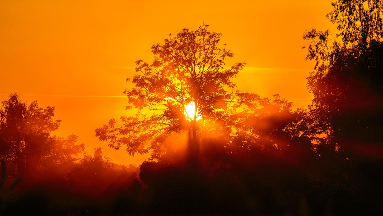 Orange smoky sunset with trees