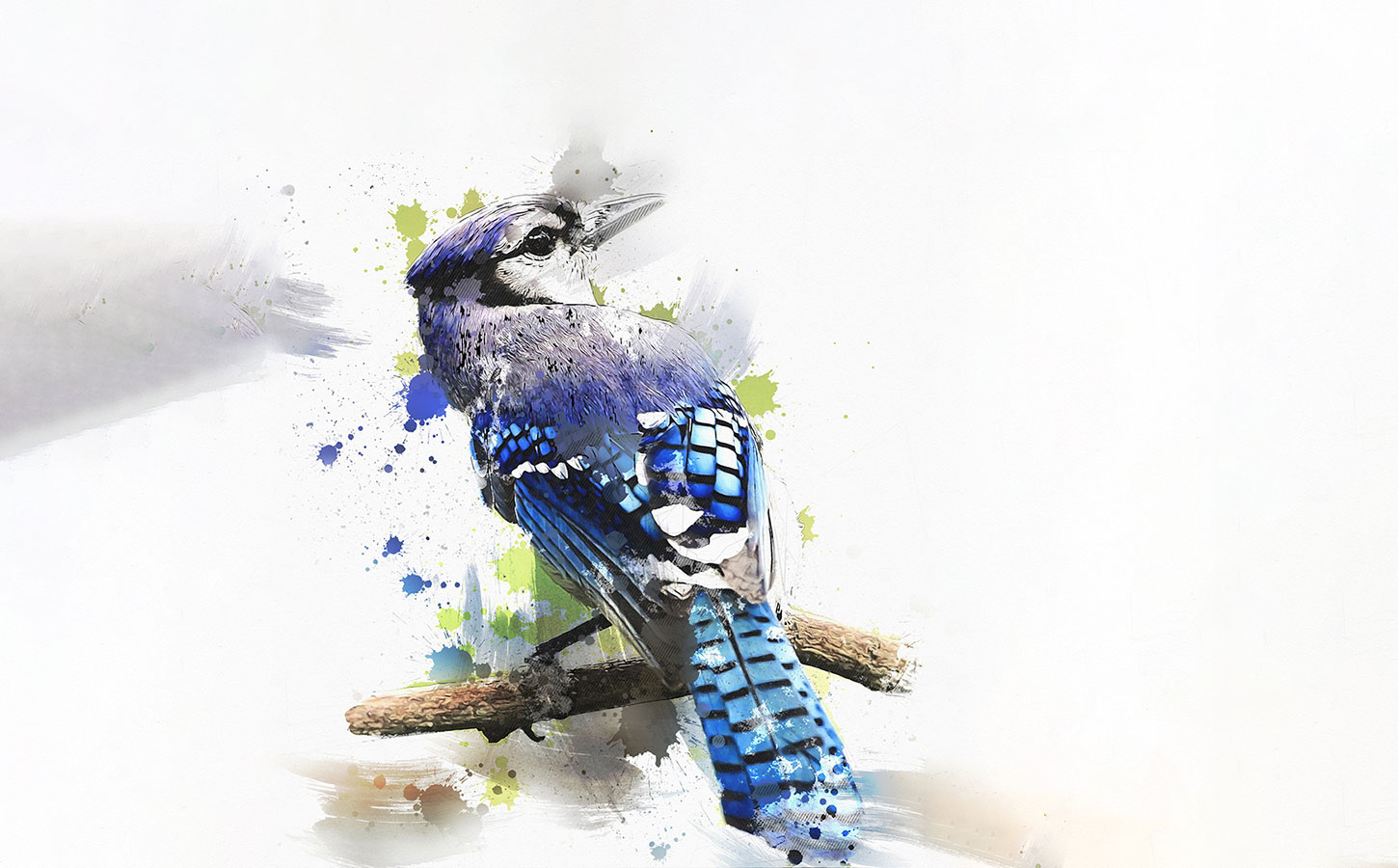 Painting of a blue jay