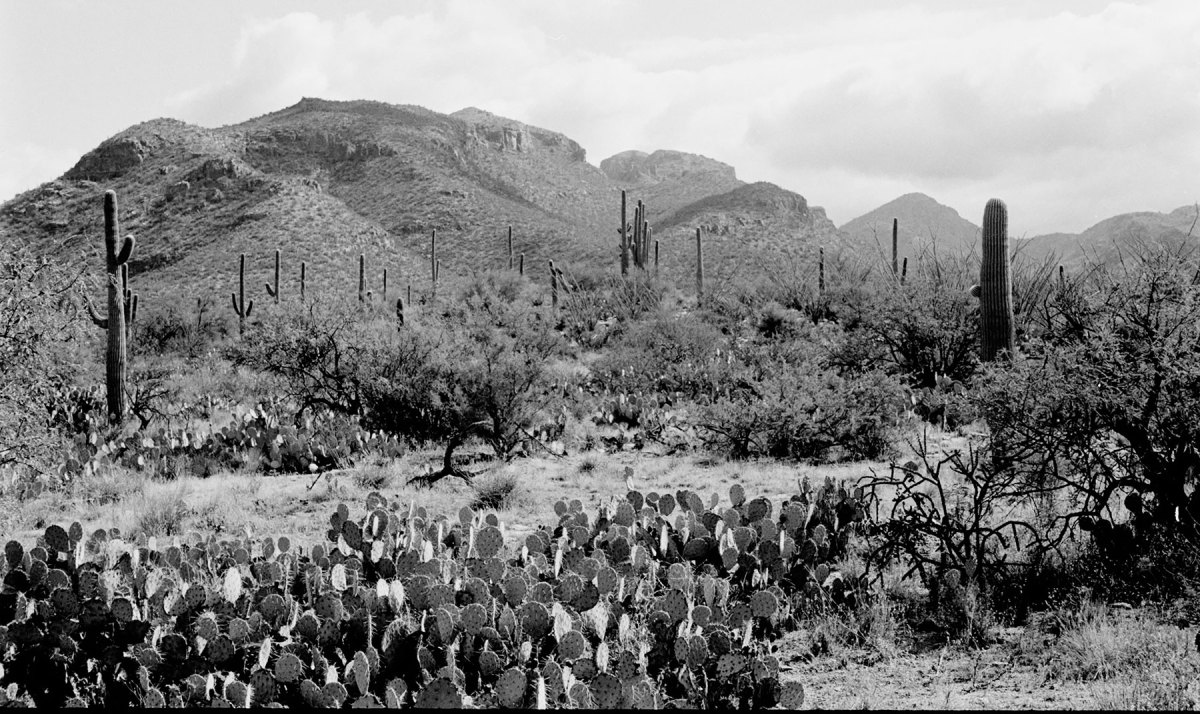 Sabino Canyon. Photo by Charles Revell.