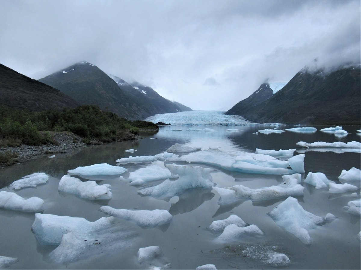 Recently-calved ice from Spencer Glacier collecting on the far shore of Spencer Lake