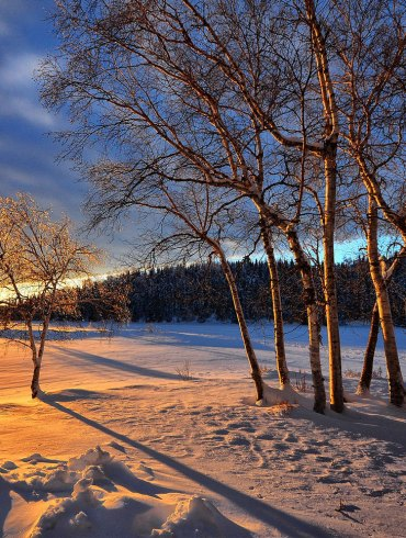 Trees in winter and sunset