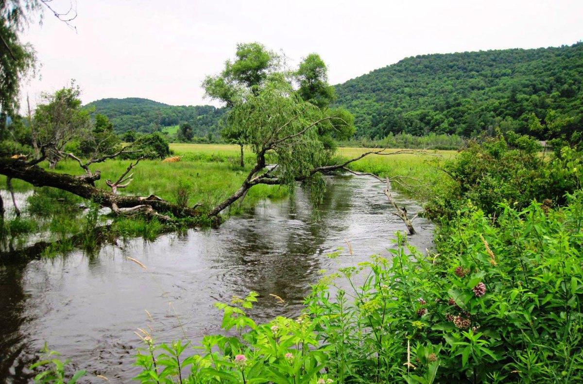 Hop Brook with fallen tree