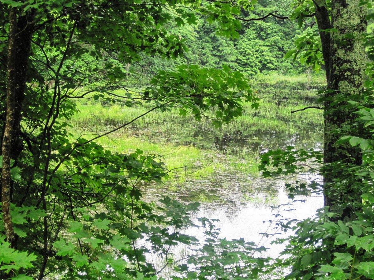 Hop Brook near its source