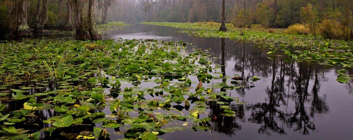 Okefenokee Swamp panorama