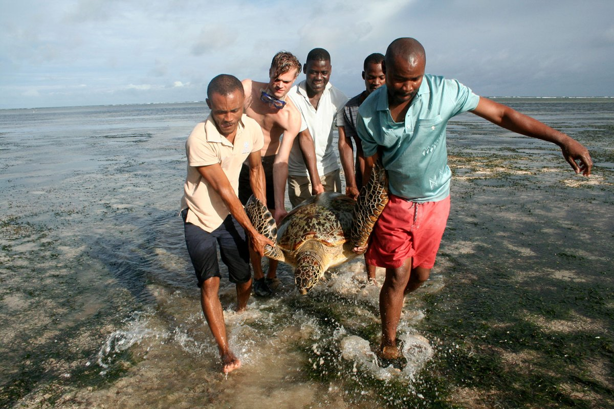 Rescuing a sea turtle. Photo by Amy Yee.