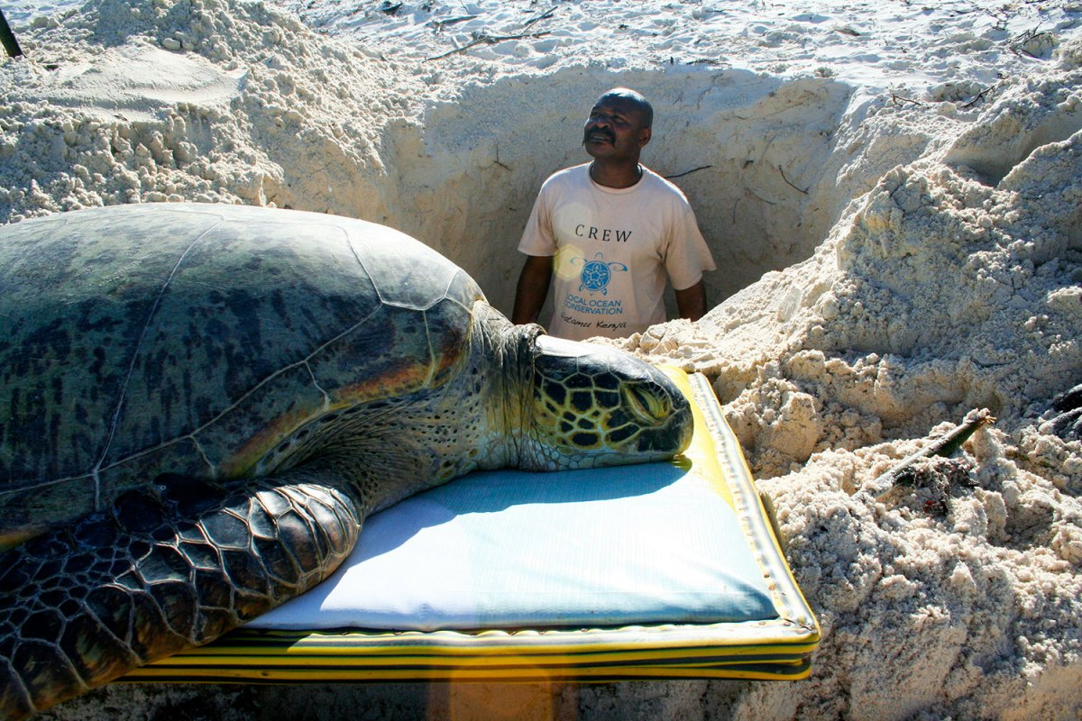 Making a grave for the sea turtle. Photo by Amy Yee.
