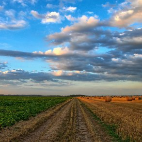 Dirt road through farm field