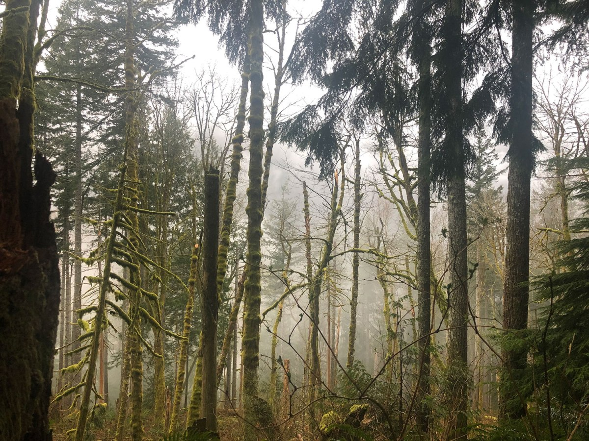 Trees and fog. Photo by Claire Thompson.