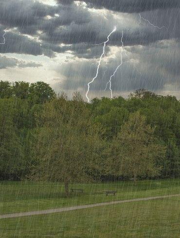 Rain, lightning, and trees.