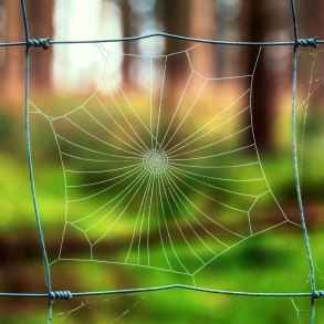 Spider web in fence