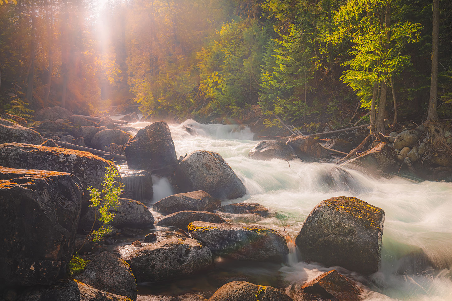 Creek and boulders in soft afternoon light