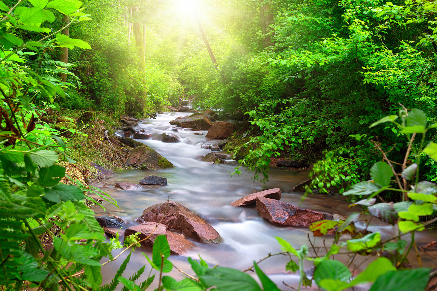 Stream surrounded by green foliage