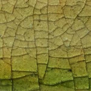 vert lichen