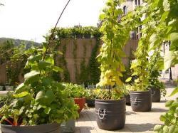 giardino abitazione tetto