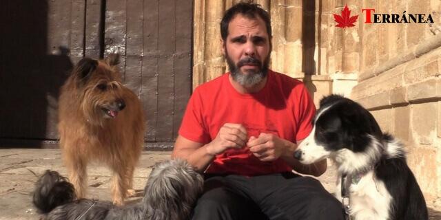 consecuencias-de-abandonar-un-perro-terranea