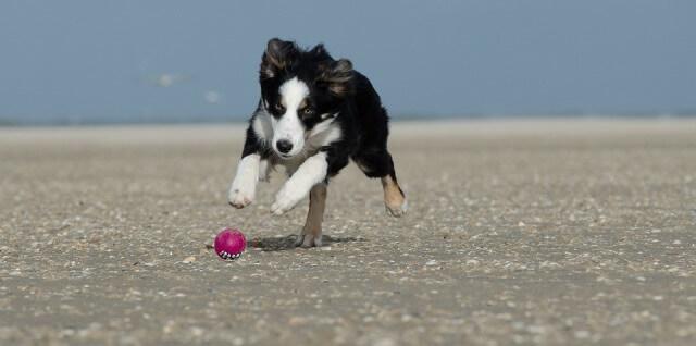 Perro jugando en la playa de Aiguaoliva en Vinarós