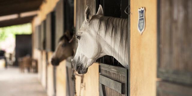 Como cuidar a un caballo.