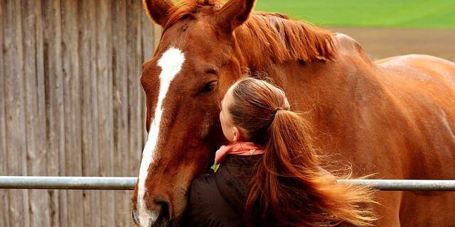 Los cuidados básicos que debe tener un caballo.