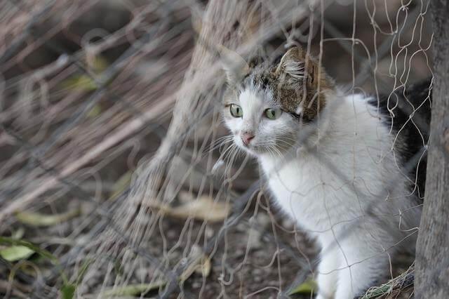 Gato escondido tras una reja