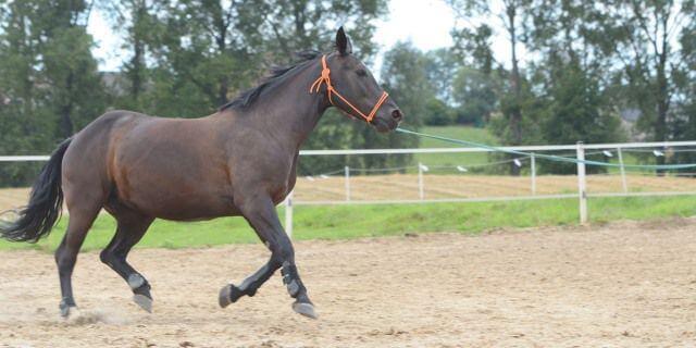 Los caballos y el problema de las patas hinchadas en invierno