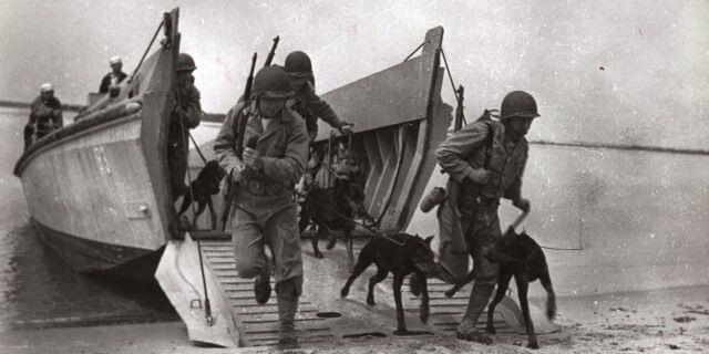 Perros soldado llegan a una playa