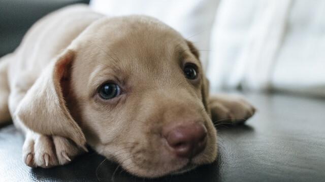 perro cachorro en adopción por abandono