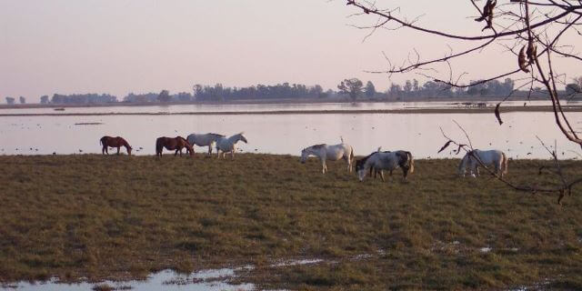 Alta tasa de gripe equina en Doñana.
