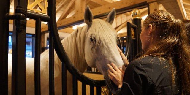Laminitis en caballos