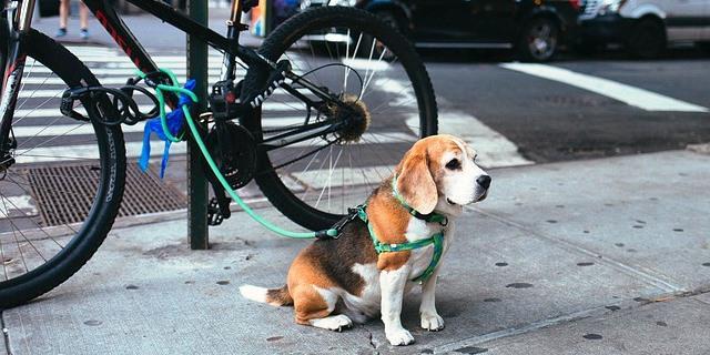 Perro amarrado a una bici en una calle.