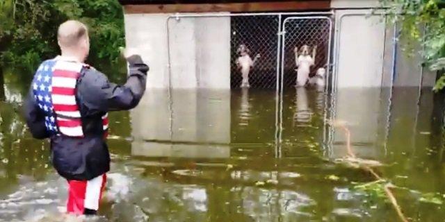 El rescate de los voluntarios a perros atrapados en una jaula.