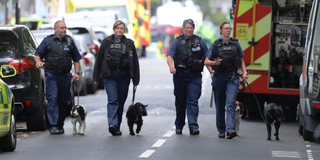 Perros de Scotland Yard.
