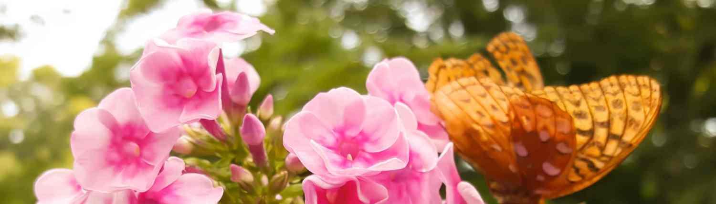 Blue Ridge Wildflower Summer Beauty