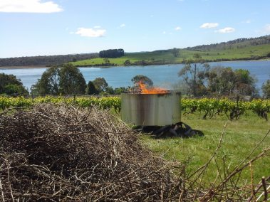burning kiln from grape prunings