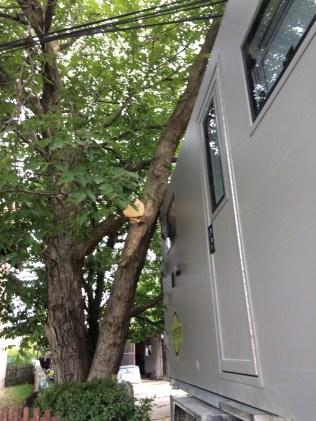 parking-serbia-tree-terratrotter