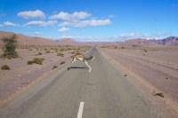 Morocco-Overland-Travel-Camel-road