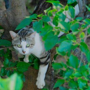 jardinons ensemble chat