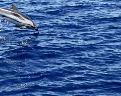Viaggi in Sardegna, sulle rotte di delfini e balene