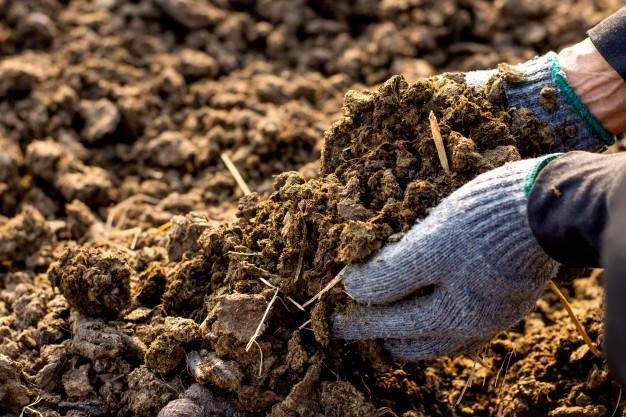 Achat de fumier pour un jardin potager
