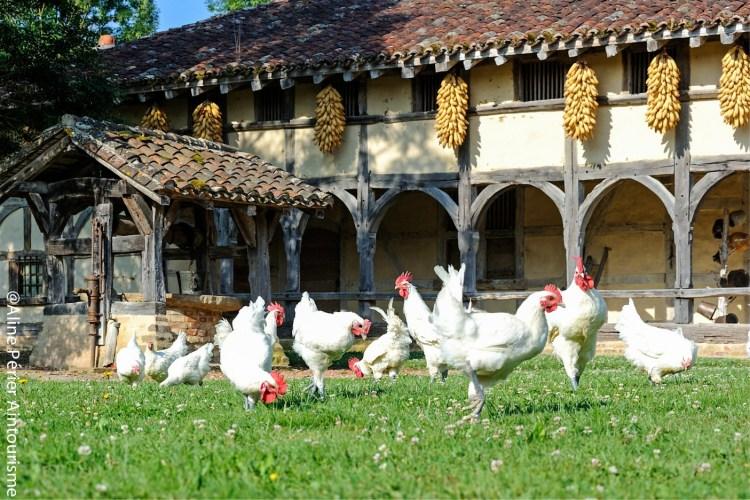 Les Glorieuses de Bresse - Ferme des Planons et Poulets de Bresse