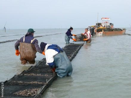 Ostreiculteurs dans la mer - Terroir Evasion