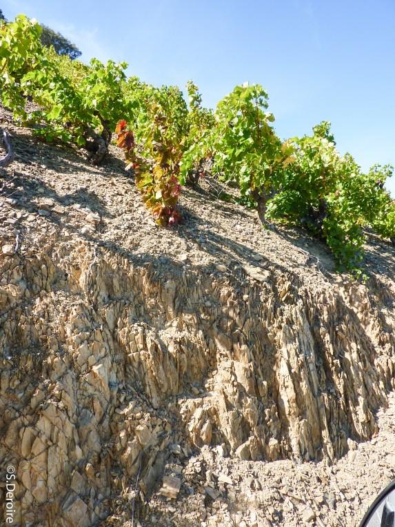 Schiste roche mère @SDeroire - Terroir Evasion