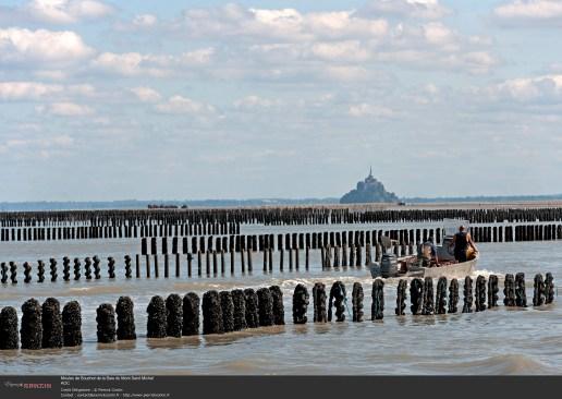 Moules de Bouchot de la Baie du Mont Saint Michel TerroirEvasion.com